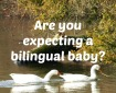 Are you expecting a bilingual baby